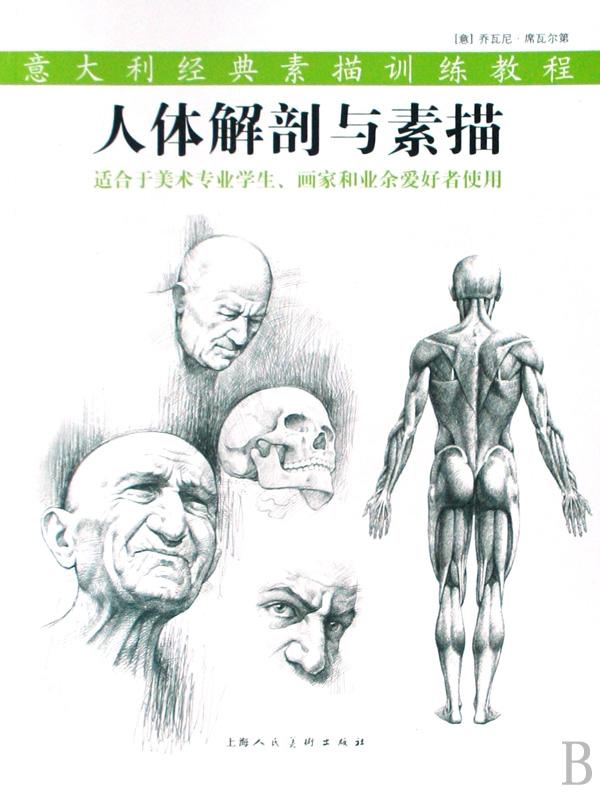 素描头颅骨骼结构图