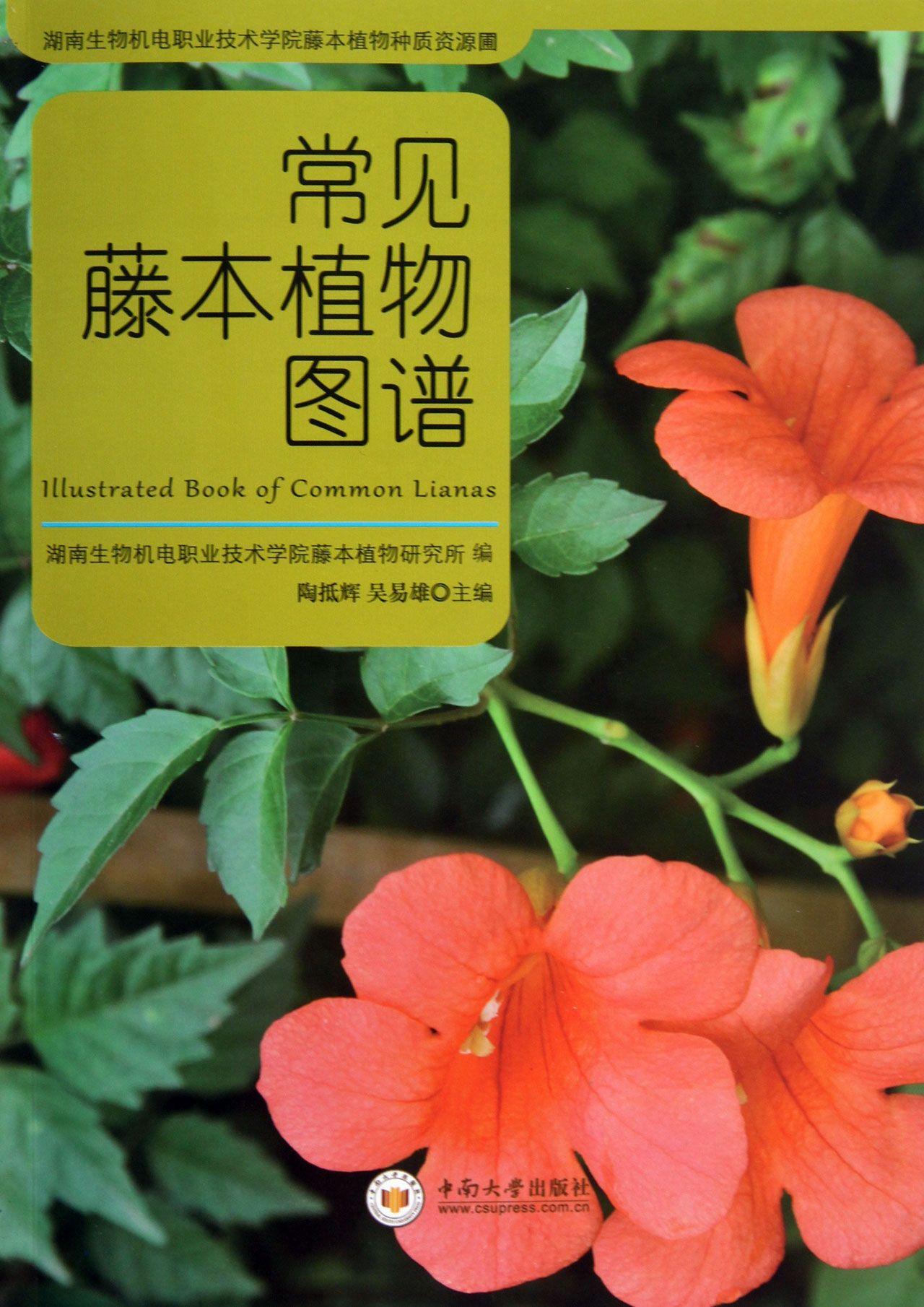 常见藤本植物图谱