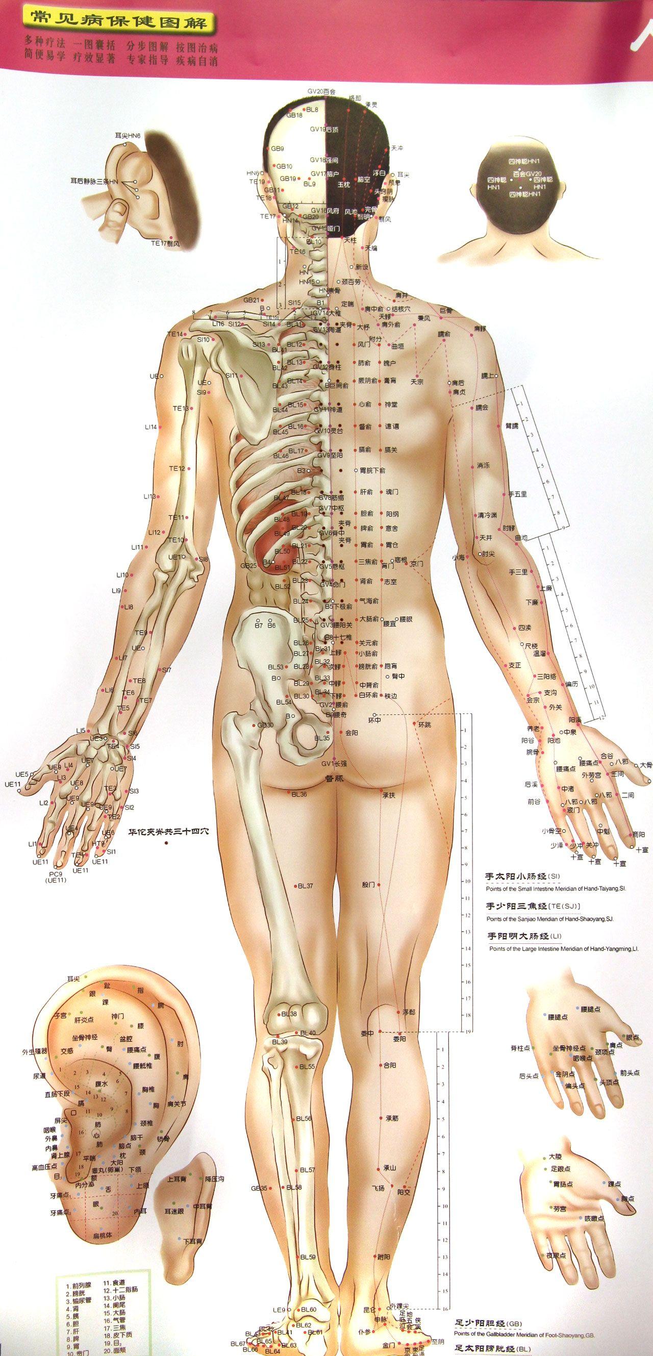 人体穴位标准挂图 中英文对照>高血压病保健图解