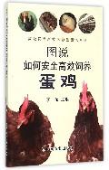 图说如何安全高效饲养蛋鸡/高效饲养新技术彩色图说系列