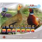 VCD珍珠鸡人工养殖技术珍禽山鸡的饲养