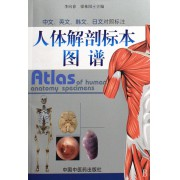 人体解剖标本图谱