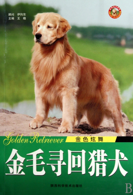金毛寻回猎犬(金色炫舞)/世界名犬系列