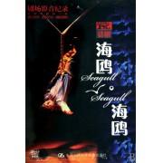 DVD话剧海鸥海鸥(2碟装)