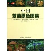 中国蕈菌原色图集(精)