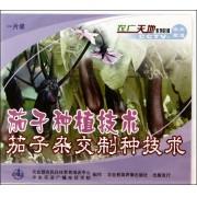 VCD茄子种植技术茄子杂交制种技术