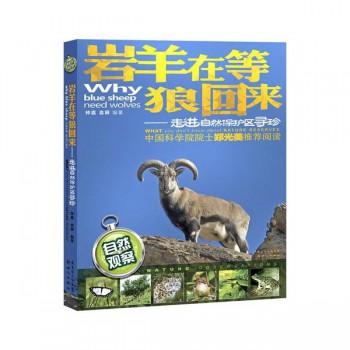 岩羊在等狼回来--走进自然保护区寻珍(自然观察)