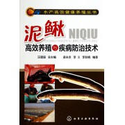 泥鳅高效养殖与疾病防治技术/水产高效健康养殖丛书