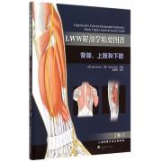 LWW解剖学精要图谱(背部上肢和下肢卷1)