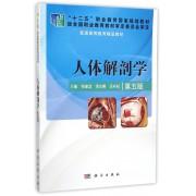 人体解剖学(第5版普通高等教育精品教材)