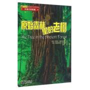 原始森林里的老树(中英文双语版)/美妙的大自然系列/怦怦跳科学图画书