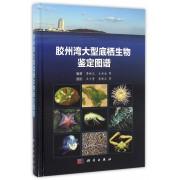 胶州湾大型底栖生物鉴定图谱(精)