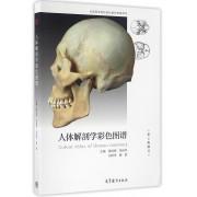 人体解剖学彩色图谱(第2版修订全国医学院校规划教材配套用书)