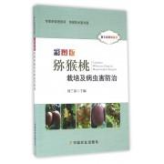 彩图版猕猴桃栽培及病虫害防治(听专家田间讲课)