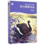 黑天鹅紫水晶(彩色插图本)/动物小说大王沈石溪品藏书系