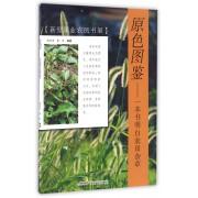 原色图鉴--一本书明白农田杂草/新型职业农民书架