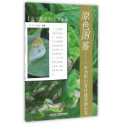 原色图鉴--一本书明白食叶蔬菜病虫害/新型职业农民书架