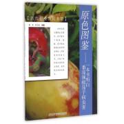 原色图鉴--一本书明白番茄辣椒茄子病虫害/新型职业农民书架