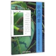 原色图鉴--一本书明白瓜类蔬菜病虫害/新型职业农民书架