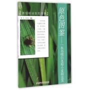原色图鉴--一本书明白水稻小麦病虫害/新型职业农民书架