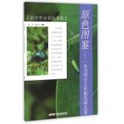 原色图鉴--一本书明白玉米棉花病虫害/新型职业农民书架