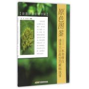 原色图鉴--一本书明白油菜大豆花生芝麻病虫害/新型职业农民书架