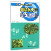 柑橘病虫害防治图册/农业病虫害防治丛书