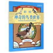 神奇的鸟类世界(湿地水域卷彩绘)