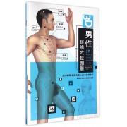 3D男性经络穴位图册(精)