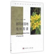 鄱阳湖湿地植物图谱/鄱阳湖生态系统研究丛书