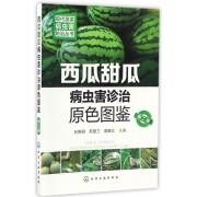 西瓜甜瓜病虫害诊治原色图鉴(第2版)/现代蔬菜病虫害防治丛书