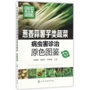 葱姜蒜薯芋类蔬菜病虫害诊治原色图鉴(第2版)/现代蔬菜病虫害防治丛书