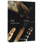 羽毛(自然演化中的奇迹)/自然文库