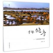 千年悠音--大漠里的歌者胡杨