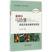 彩图版马铃薯栽培及病虫害绿色防控(听专家田间讲课)