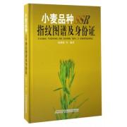 小麦品种SSR指纹图谱及身份证(精)