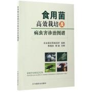 食用菌高效栽培及病虫害诊治图谱